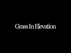 Grass in Elevation